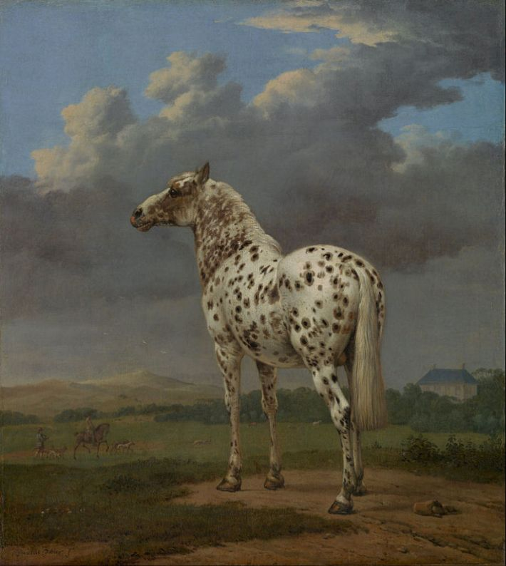 Paulus Potter,  Het bonte paard, 1650-54, olieverf op doek,  49.5 x 45 cm, The J. Paul Getty Museum, Los Angeles